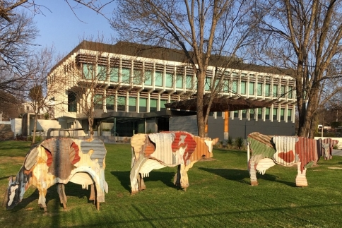 Metal cows in front of NZ embassy